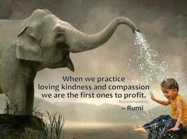 kindness, compassion and mindfulness