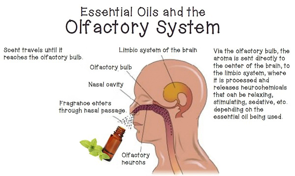 Image result for essential oils and mood
